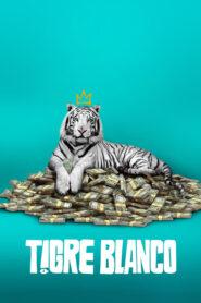 Tigre Blanco 2021