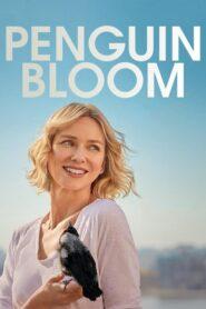 Penguin Bloom 2021