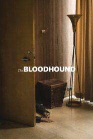 The Bloodhound 2020