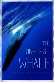 The Loneliest Whale: The Search for 52 2021