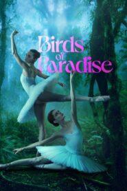 Aves del paraíso 2021